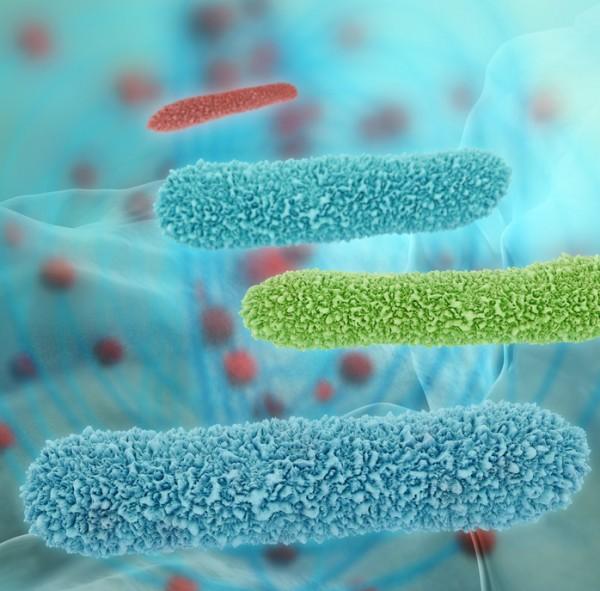 Mikriobelle Belastung des Leitungswasser