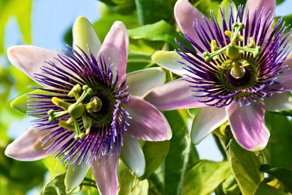 Pflanzenheilkunde - Phytotherapie