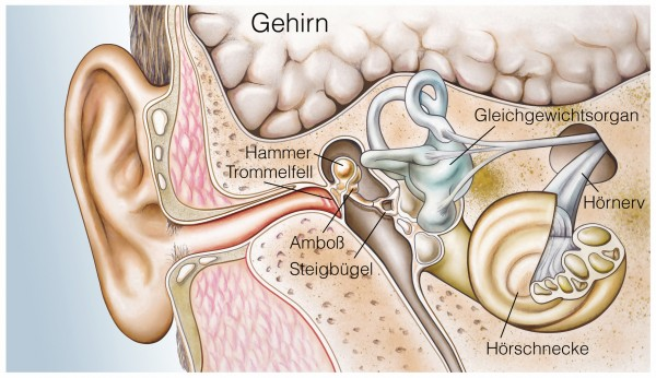 Tinnitus and Osteopathy
